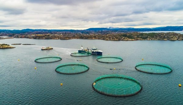 Salmon Farming in Ireland